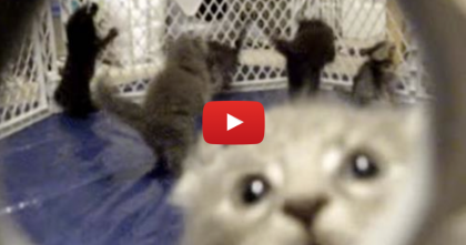 These Kittens Get SOO Excited, They Start Hopping Like Pop Corn… Hilarious!!