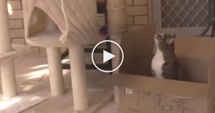 They Got A Brand New Cat Tree, But This Cat Has Something Totally Different In Mind…