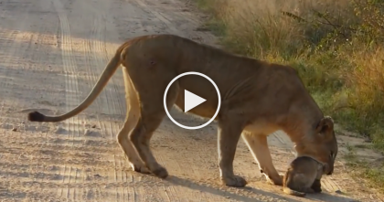 They Were Recording In Africa, Then They Captured The Cutest Moment Ever…