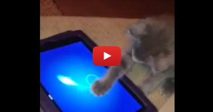 This 7-Month Old Kitten Gets His Paws On The iPad… And You Won't Believe His Skills!!