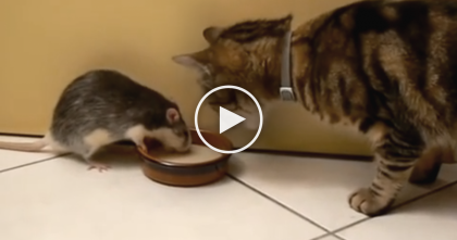 Thirsty Kitty Tries To Drink Some Milk, But Then He Sees It… OMG, Are You Kidding Me?!
