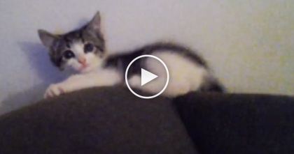 This Kitten Discovers How To Run Sideways…You've Got To See This! Too CUTE…