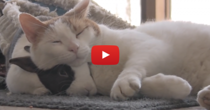 This Kitty Absolutely Adores His Headrest, But Then… I Can Hardly Handle It!!