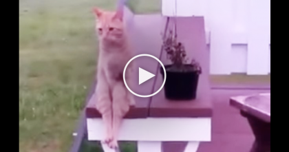 Watch Till 0:20, When This Cat Decides To Become A Human… What He Does SOO funny!!