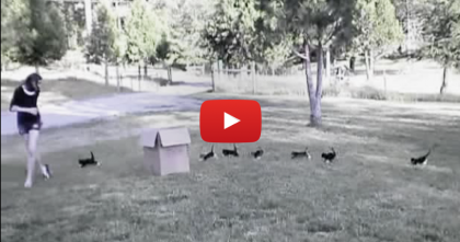 13 Kittens Discover The Great Outdoors Together, And It's The Cutest Thing Ever… WATCH.