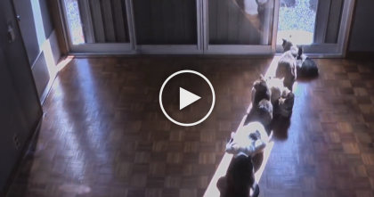 They Setup A Secret Camera To Record What Their Cats Do When The Sun Moves… Just WATCH.