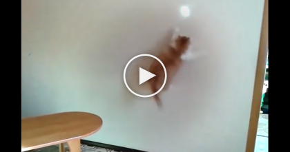 When This Cat Notices The Reflection On The Wall…Just Watch His Reaction… OMG!!