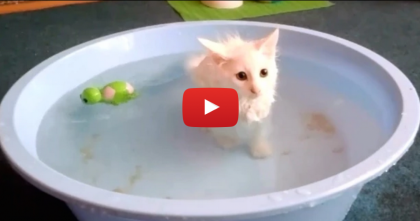 When This Cute Kitten Gets A Bath, You Won't Believe His Reaction… OMG.