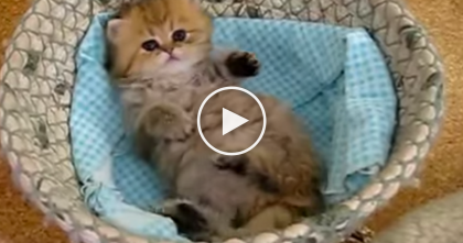 Your Heart Will Explode When You See This Little Kitten In His Basket… OMG, Simply PRICELESS.