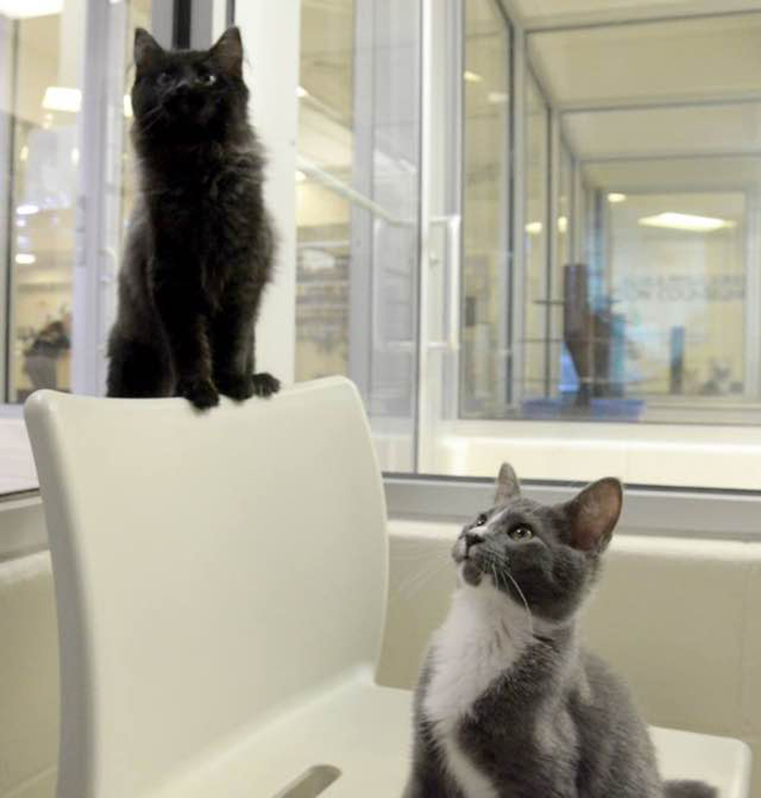 2_cats_in_shelter
