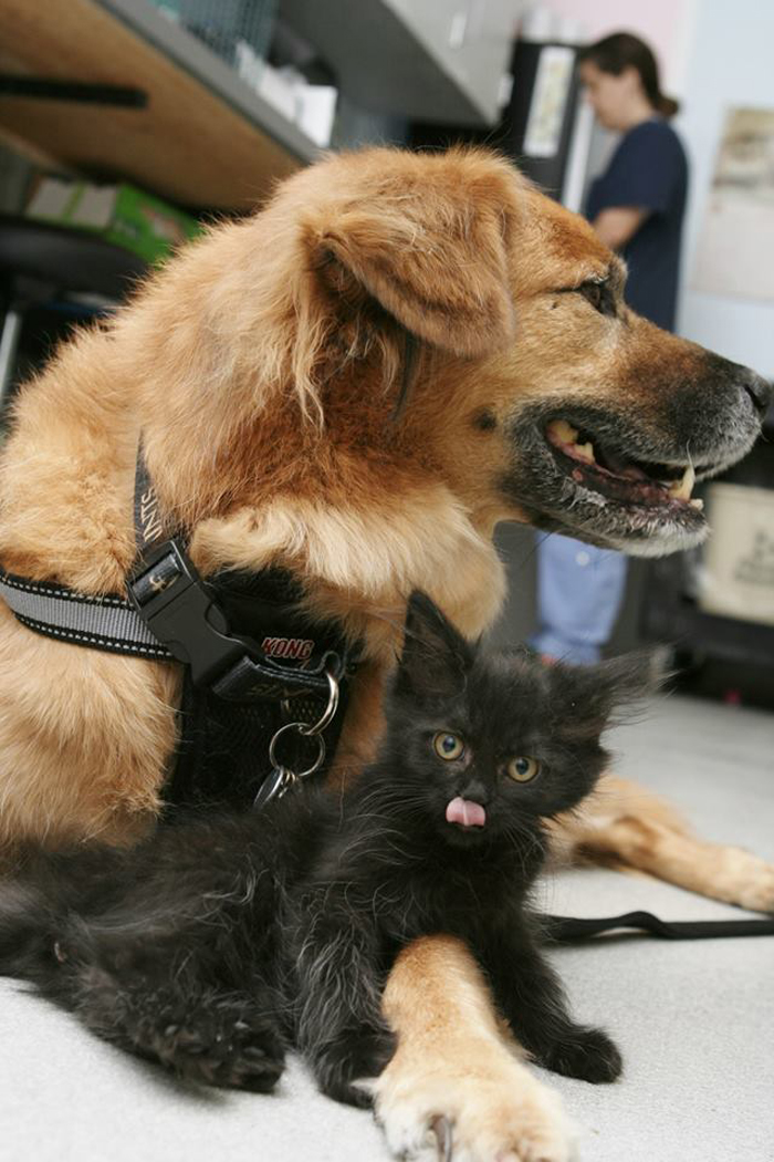 Black_kitten_nanny_dog