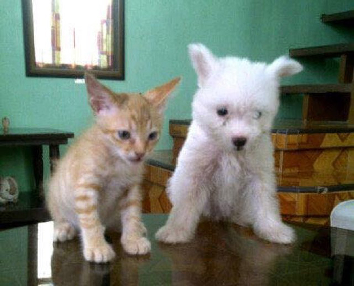 Cat_and_dog_on_table