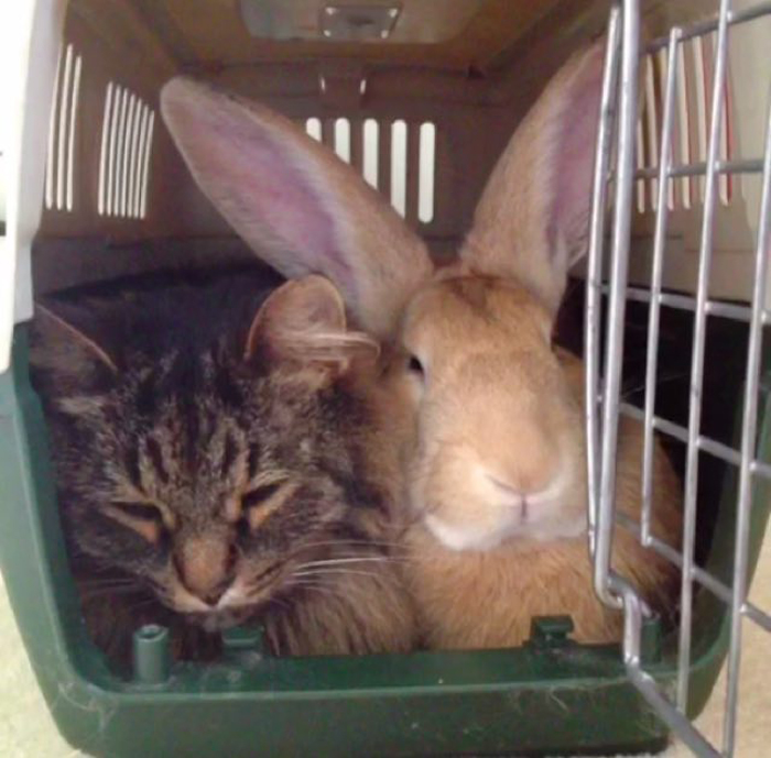 Cat_and_rabbit_in_cage