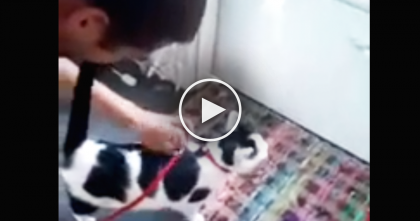 "When This Cat Hears The Word ""Walk"", You Won't Believe What She Does… OMG."