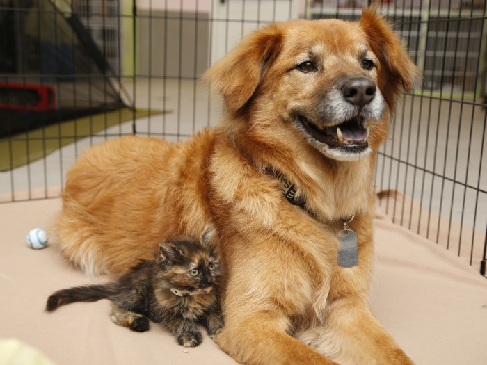 Kitten_and_dog_in_cage