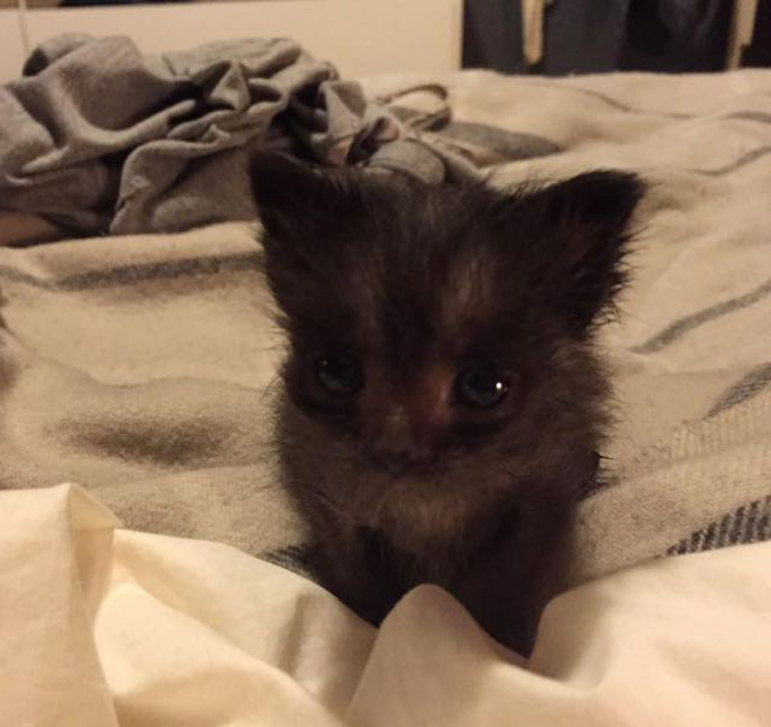 Kitten_on_bed
