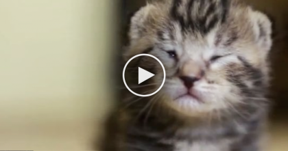 Abandoned 8 Day Old Kitten Was Just Minutes From Death, But Just Watch What They Did…