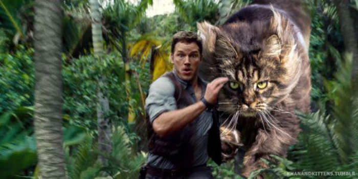 chris_pratt_chased_by_a_cat