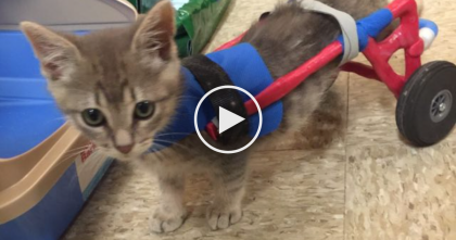 He Only Has Two Legs But Watch What Happens At 0:47, Your Heart Will MELT…