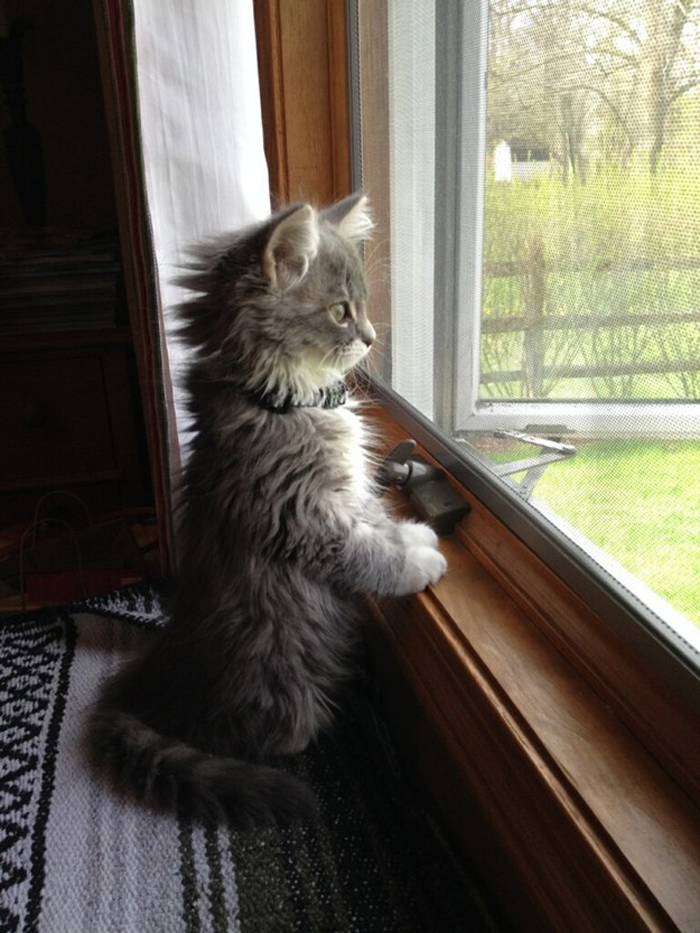 kitten_at_window