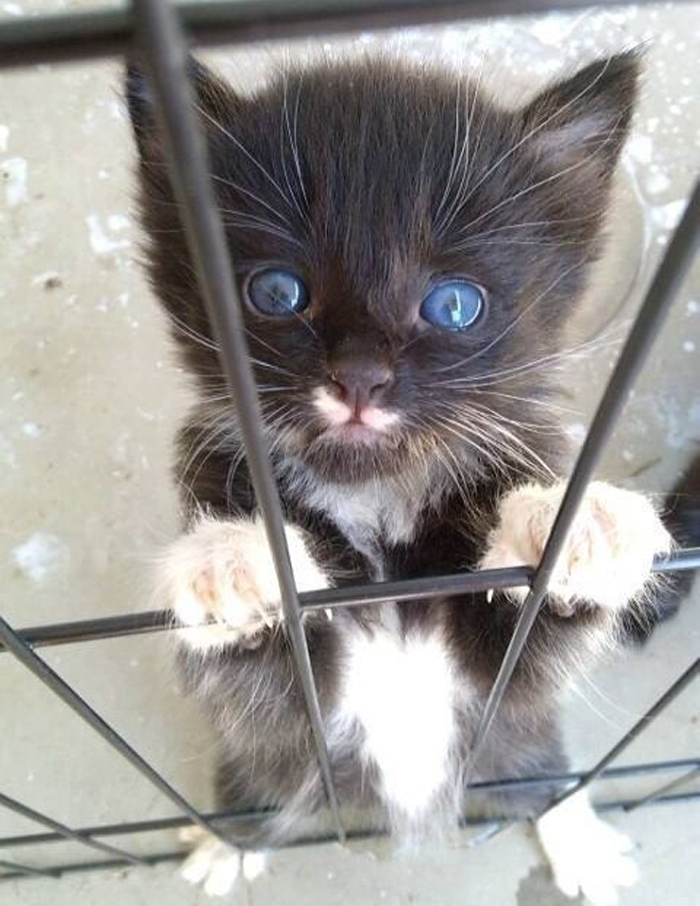 kitten_in_cage