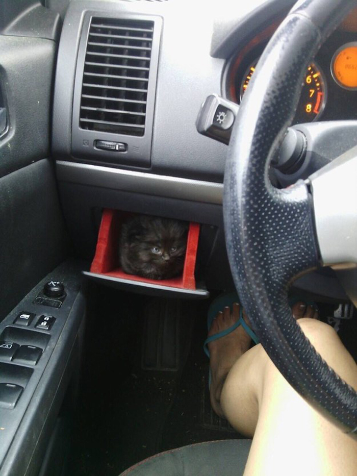 kitten_in_glovebox