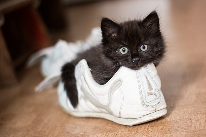 kitten_in_shoe