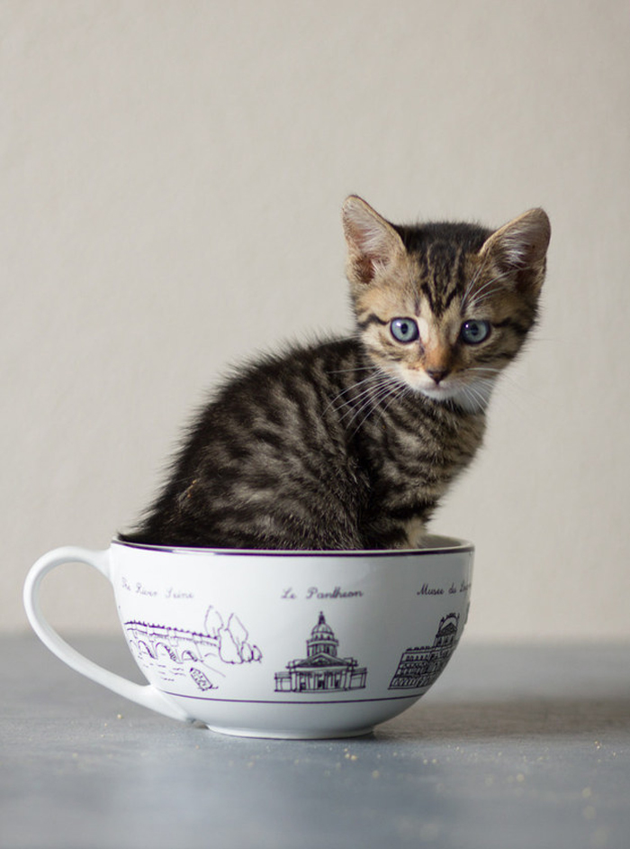 kitten_in_teacup