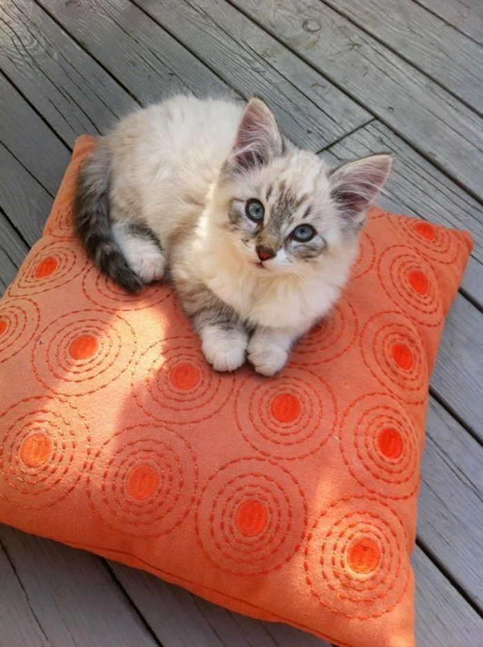 kitten_on_pillow