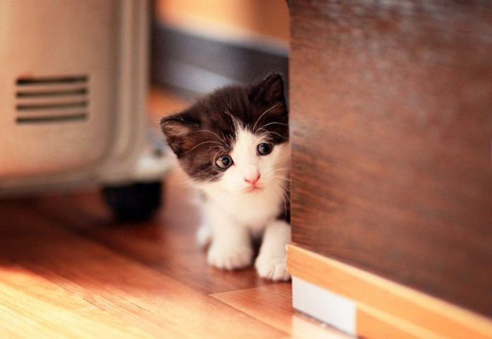 kitten_peers_around_corner