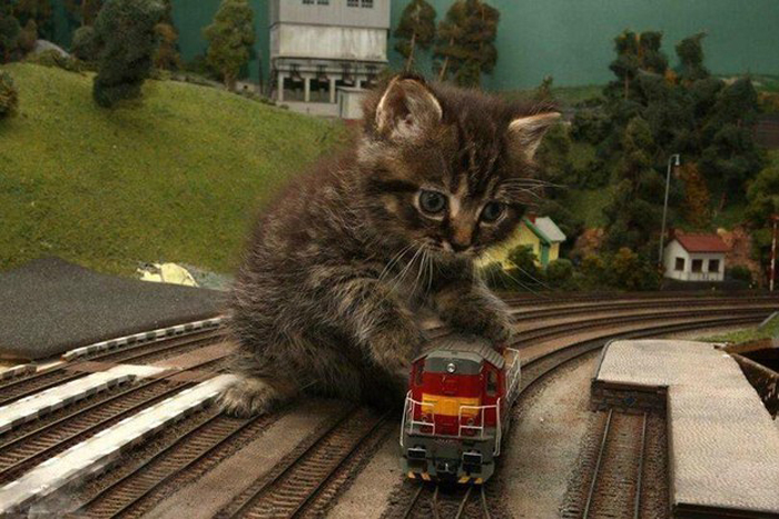 kitten_plays_with_train
