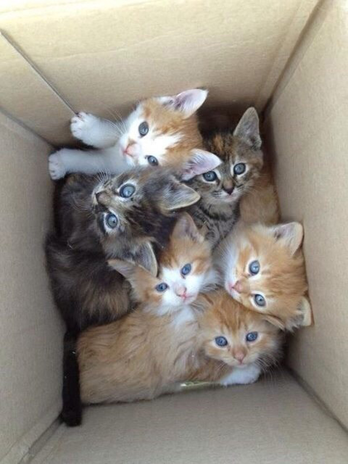 kittens_in_box