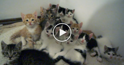 She Opened Up The Door And This Is What She Found… A Pile Of Adorable Kittens, WATCH.