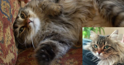 They Adopted A Kitty, But It Took Over 28 Days, Then Finally… I Just LOVE The Ending!!