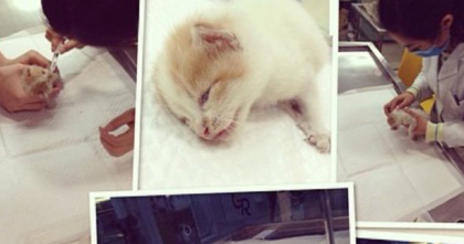 They Found A Kitten In Their Garage, But They Didn't Expect THIS Would Happen…WOW.