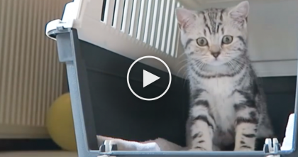 They Got A New Kitten, And Boy Oh Boy, Is He The CUTEST Thing EVER…Watch.