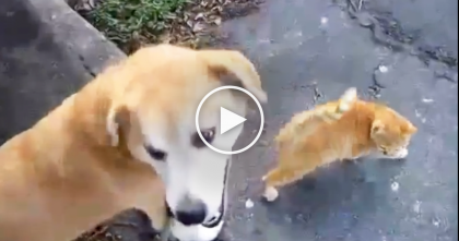 She Goes On A Walk With Her Dog, But Keep Watching… See What The Cat Does, SWEETEST Ever!!