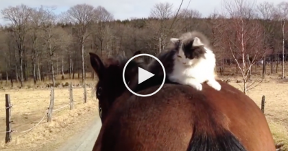 What Happens When This Cat Is Put On Top Of A Horse? I've Never Seen Anything Like THIS…