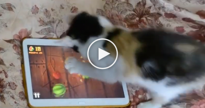 When Kitty Sees What's On The iPad Screen, Just Watch What He Does… OMG!!