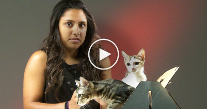 When These 'Cat Haters' Discover A Box Full Of Kittens, Just WATCH Till The End…