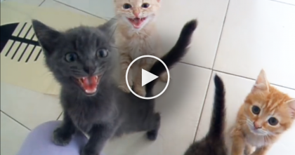 When These Foster Kittens Get Hungry, Just Watch And Listen… Your Heart Will Melt, ADORABLE.