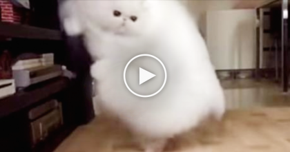When You See This Huge Fluff Ball Jump Around… WOW, Your Jaw Will Drop… OMG