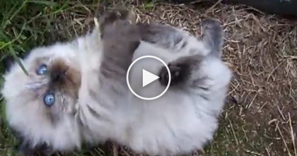 Fluffy Little Kitten Is About To Melt Your Heart To Pieces…Just PRICELESS.