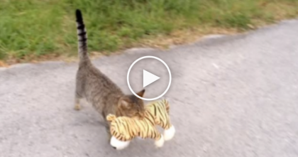 Kitty Decides To 'Borrow' Something From The Neighbor's House, Just WATCH What It Is…