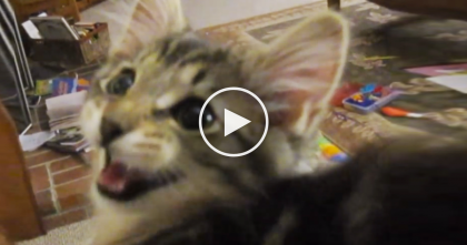Kitty Has The Strangest Meow I've EVER Heard, Just Wait Till You Hear This… OMG.
