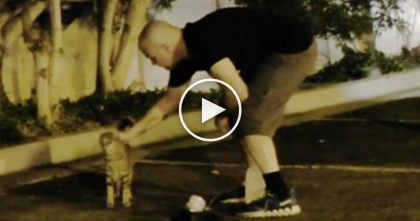 These Guys Do Something For 100+ Cats Every Night… Just Wait Till You See It, AMAZING.