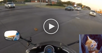 She Noticed A Kitten Fall From A Moving Car, But What She Did Next… INCREDIBLE.