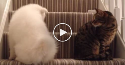 They Didn't Get Along, But Then One Day Something Happened…Just Watch Till 2:42.