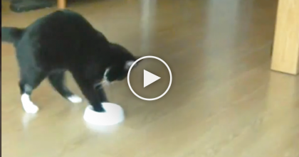 When The Food Bowl Is Empty, This Kitty Does Something I've Never Seen Before…