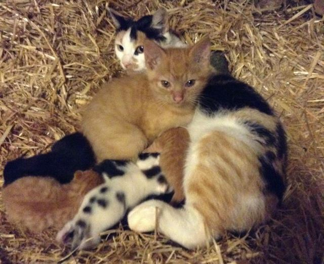 1-cat-mom-adopts-kitten